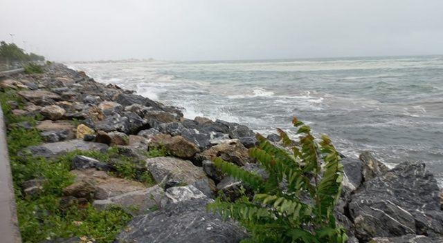 Marmara müsilajı yeniden kıyılara birikti