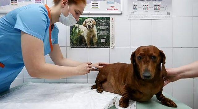 Rusya'da hayvanlar için aşılama başladı