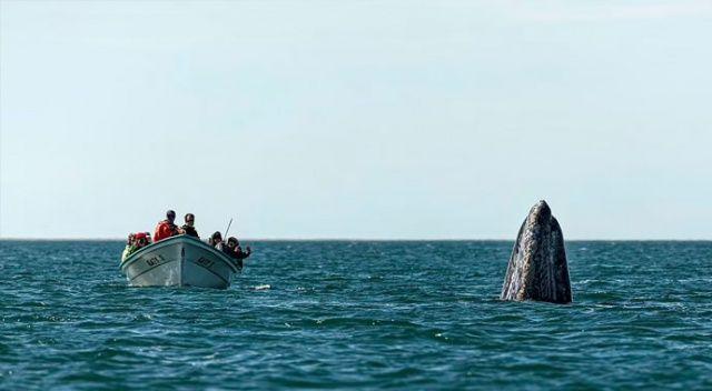 Şakacı balina: Önde beklenirken arkadan çıktı