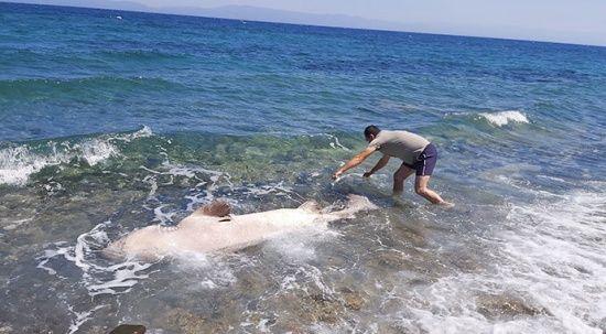 3 metrelik köpek balığı kıyıya vurdu
