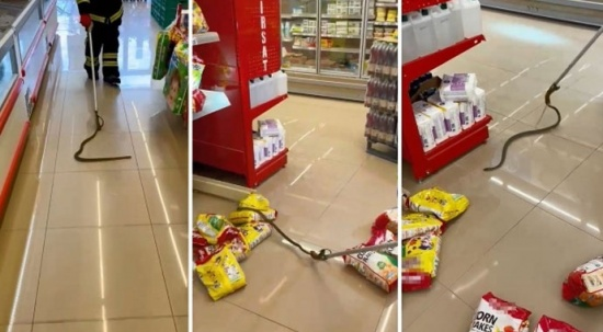 Alışverişe gittikleri marketin raflarından yılan çıktı!
