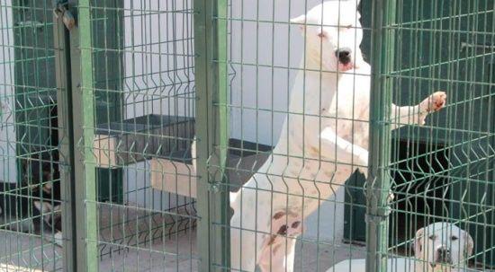 Bu köpekleri beslemenin cezası 11 bin TL