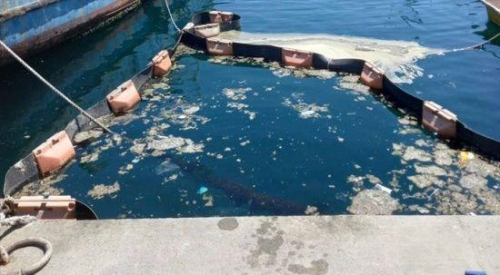 İstanbul Üniversitesi, müsilajı deniz bakterisiyle temizlemeyi başardı