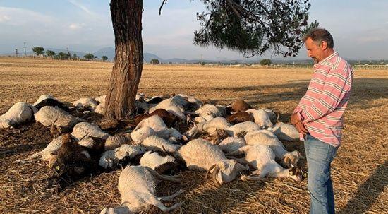İzmir'de yıldırım düştü, 51 koyun telef oldu