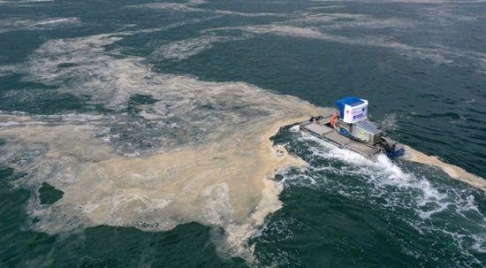 Müsilaja karşı deniz bakterisi
