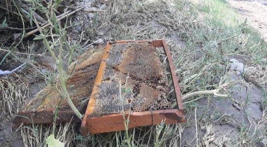Sel nedeniyle 400 kovan arı telef oldu