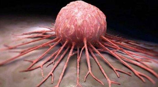 Sülükten kanser ilacı yapacağız