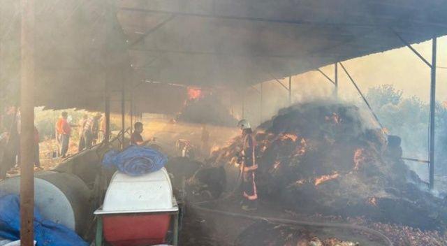 13 büyükbaş hayvan yangında telef oldu