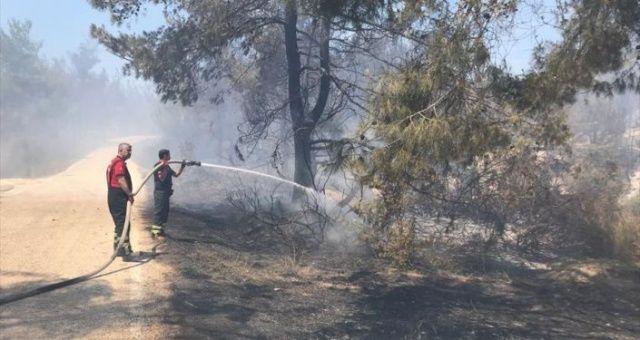 Bakan Pakdemirli'den Adana'daki orman yangını hakkında açıklama