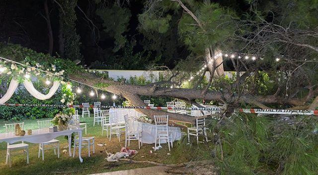 Düğünde facia! Davetlilerin üzerine ağaç devrildi: Ölü ve yaralılar var