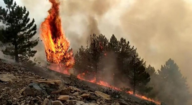 Elazığ'da orman yangını çıktı, çok sayıda ekip müdahale ediyor