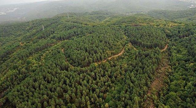 Gaziantep'te ormanlara giriş yasağı