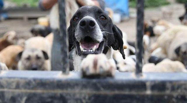 Hayvan öldürene 10  yıla kadar ceza