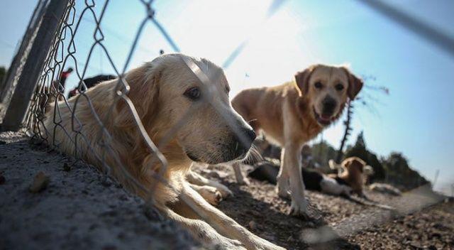 Hayvanları Koruma Kanunu teklifi Meclis'e sunuldu
