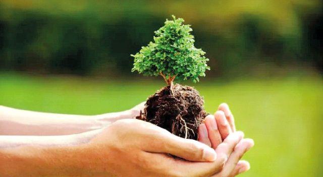 Hazine arazileri gelir getiren ağaçla yeşilleniyor