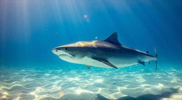Her sene 100 milyon civarı köpek balığı yüzgeci için katlediliyor