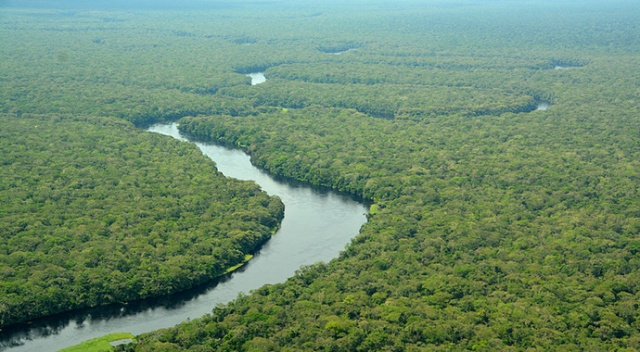 Salonga Ulusal Parkı, Tehlike Altındaki Dünya Mirası Listesi'nden çıkarıldı