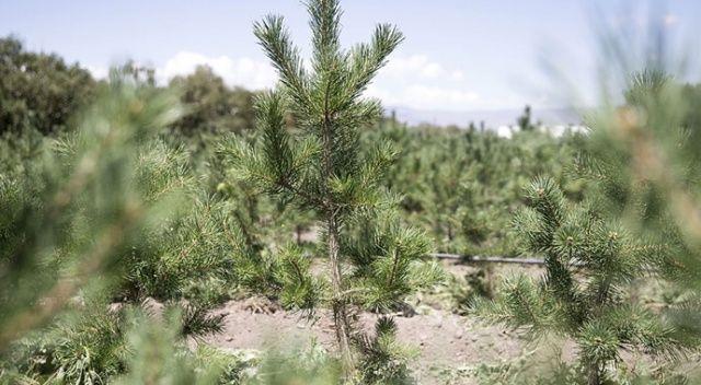TOBB'dan yanan ormanlar için 5 milyon liralık destek