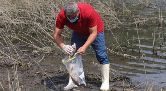 Alibeyköy Barajı'ndan numune alındı: Balık ölümleri inceleniyor