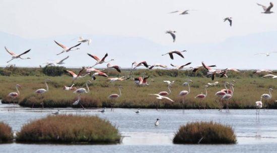 Bu defa yer İzmir: Flamingo ölümlerinin sebebi ne?