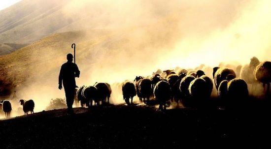 Çobanların kavgasında kan aktı: 1 ölü