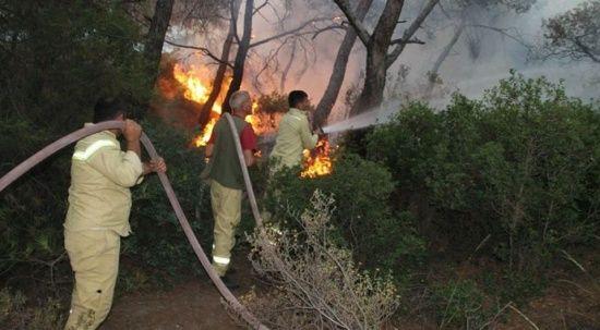 İzmir Foça'daki yangın saatler sonra kontrol altına alındı