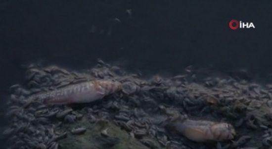 Küçükçekmece'de ölü balıklar kıyıya vurdu, kötü koku yayıldı