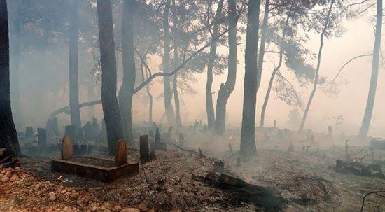 Manavgat'ta seralar yandı, mezarlıklar küle döndü