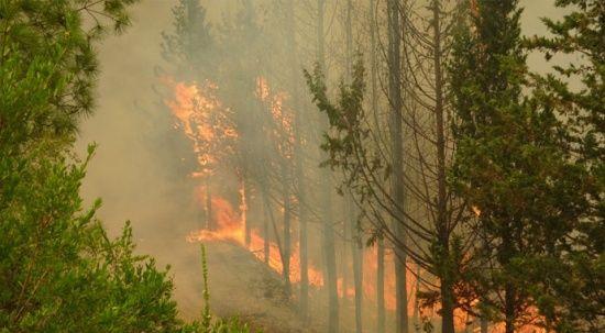 Orman yangınlarında kirli iş birliği