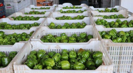 Sebze ve meyvedeki  fiyat artışları geçici