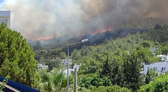 Bodrum'da makilik ve ormanlık alanda yangın