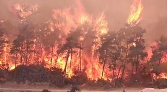 Tarım ve Orman Bakanlığı yangınların son durumunu açıkladı