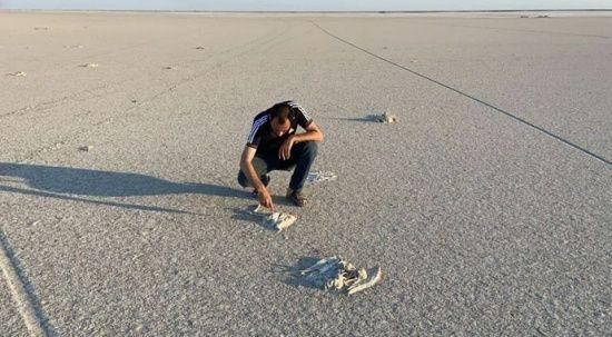 Tuz Gölü'nde toplu flamingo ölümleri: Soruşturma başlatıldı