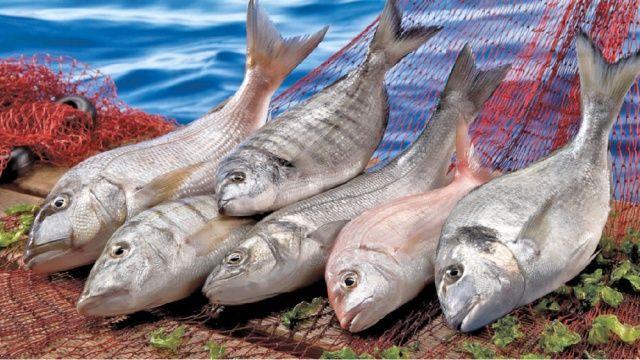 Balık ihracatında milyarlık koşu!