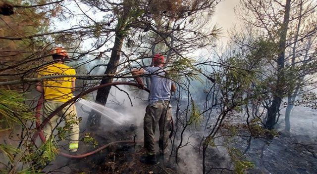 Çanakkale Ezine'de orman yangını çıktı