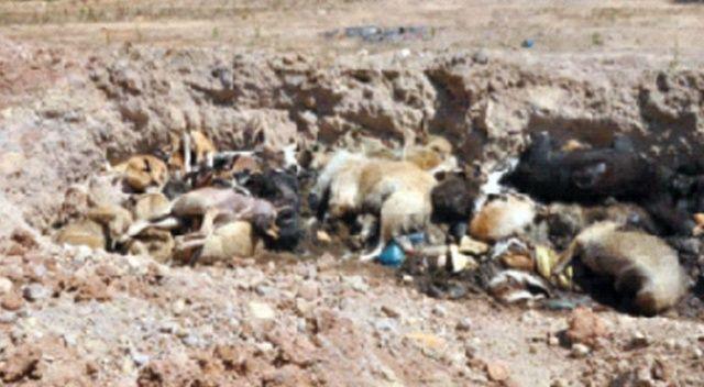 İBB barınağında yüzlerce ölü hayvan şoku