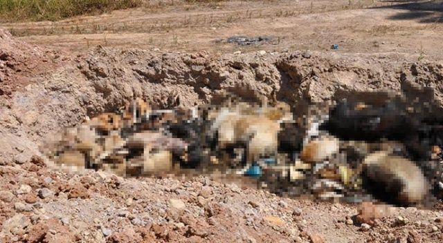 İBB hayvan barınağında vahşet: Telef olmuş hayvanlara toplu mezar