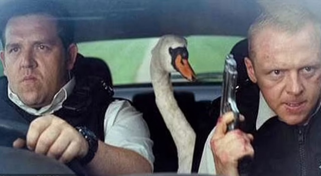 İngiliz polisinden kuğu operasyonu