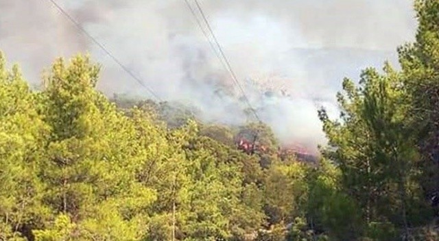 Muğla'da orman yangını! Havadan müdahale ediliyor