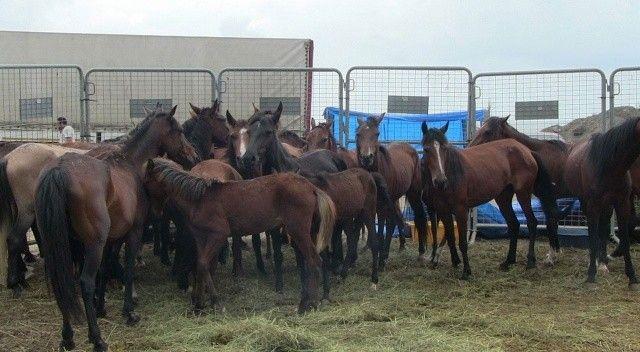 Ölüme terk edilen 33 atı hayvanseverler kurtardı