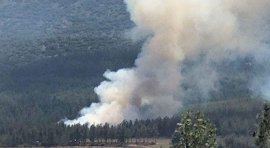 Denizli'de orman yangını! Kısa sürede kontrol altına alındı