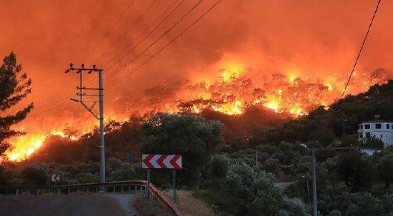 Festival iptal edildi, toplanan kaynak orman yangınları için kullanılacak