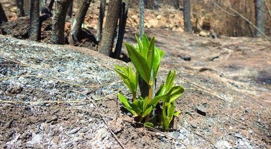 Marmaris'te doğa yeniden canlanmaya başladı