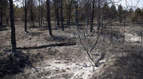 OGM'den yanan ormanlar için 3 adım formülü