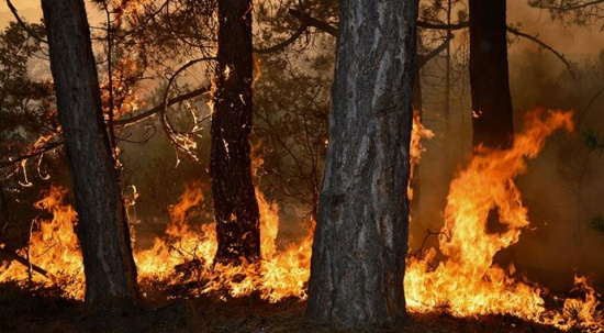 Pakdemirli: Büyük yangınlar söndürüldü