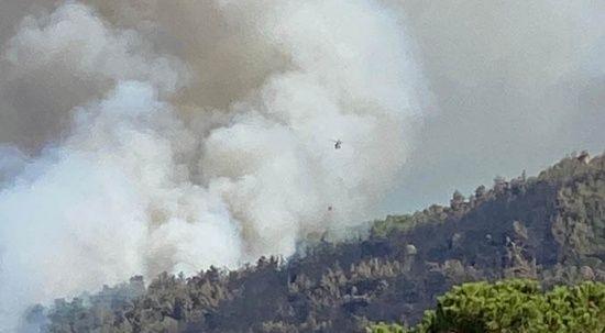 Yine orman yangını çıktı