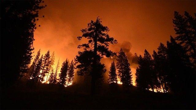 ABD'de yangınlar sürüyor! Dünyanın en büyük ağaçlarını tehdit altında