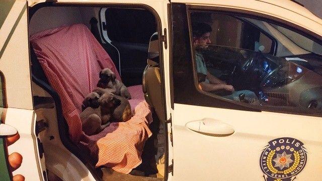 Ağzı bağlı torbanın içinden 6 köpek yavrusu çıktı