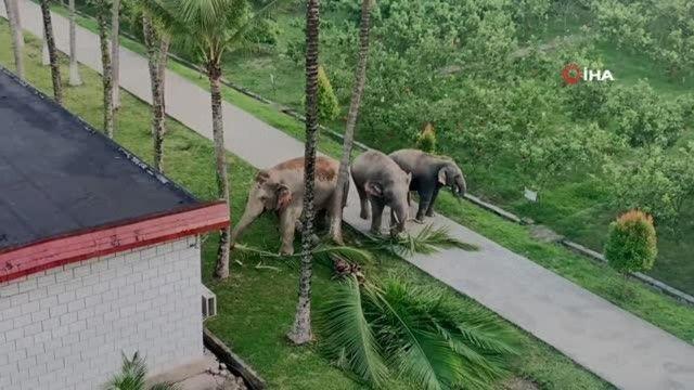Çin'de filler karakol bastı!