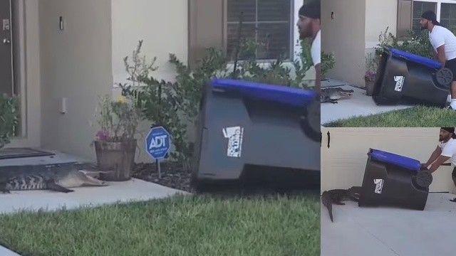 Çöp kutusuyla timsah yakaladı!
